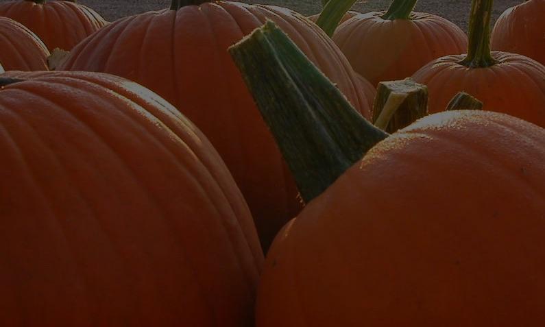 images/slideshow/pumpkins_bg.jpg